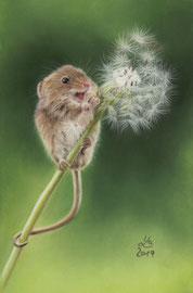 harvest mouse, pastel on pastelmat, 16 x 24 cm, reference photo Pam Donovan