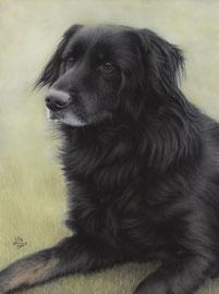 """""""Vin"""", pastel on pastelmat, 30 x 40 cm, commission"""