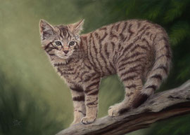 scottish wildkitten on tree, pastel on pastelmat, 28 x 39 cm, reference photo Peter Trimming; SOLD