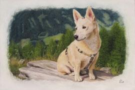"""""""Felix' rest"""", pastel on pastelmat, 40 x 60 cm, commission"""