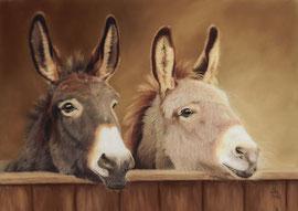 Donkeys, pastel on pastelmat, 28 x 40 cm, reference photo Melanie van de Sande, pixabay