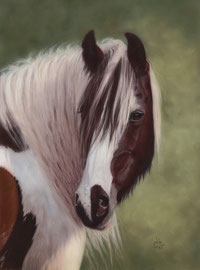 """Joy"", Irish Cob, pastel on pastelmat, 30 x 40 cm, reference photo Anja Schäpertöns, www.horse-arts.de; SOLD"