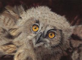 Baby eagle owl, pastel on pastelmat, 16 x 22 cm, commission; reference photo courtesy of Tiergarten Nürnberg (zoo)