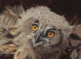 Baby eagle owl, pastel on pastelmat, 16 x 22 cm, commission; reference photo courtesy of Tiergarten Nürnberg (zoo)
