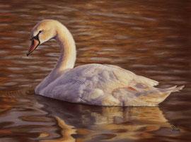Swan, pastel on pastelmat, 30 x 40 cm, reference photo Michael Gaida, pixabay