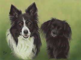 """Ben + Sally"" (Border Collie + Crossbreed), pastel on pastelmat, 29 x 39 cm, commission"