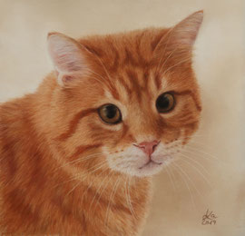 """Lysander"", pastel on pastelmat,  21 x 21 cm, private reference photo"