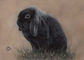 dwarf rabbbit, pastel on pastelmat, 20 x 30 cm, reference photo Marcel Langthim, commission