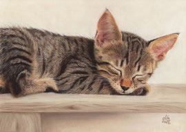 180 €  Tabby kitten, pastel on pastelmat, 20 x 28 cm, reference photo Bernfried Schnell