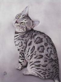 """Nice Hope of Speyerer Magic"", Silver Leopard cat, pastel on pastelmat, 29 x 39 cm, commission"
