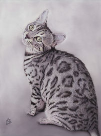 """Nice Hope of Speyerer Magic"", Silver Leopard cat, pastel on pastelmat, 29 x 39 cm, commission (Bengal-Zucht ""Speyerer Magic"", http://speyerermagic.npage.de/)"