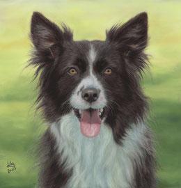 """Bella"", Border Collie crossbreed, pastel on pastelmat, 30 x 30 cm, commission"