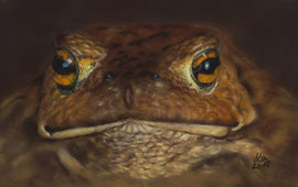 toad, pastel on pastelmat, 18 x 28 cm, reference photo pixabay; SOLD!