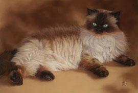 """Yoda"", persian cat, pastel on pastelmat, 40 x 60 cm, commission"