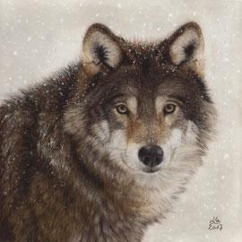 """winter wolf"", pastel on pastelmat, 28 x 28 cm, reference photo Madeleine Lewander; SOLD"