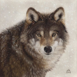 """winter wolf"", pastel on pastelmat, 28 x 28 cm, reference photo Madeleine Lewander; SOLD"