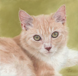 cream cat, pastel on pastelmat, 20 x 20 cm, reference photo lovecatz, Flickr