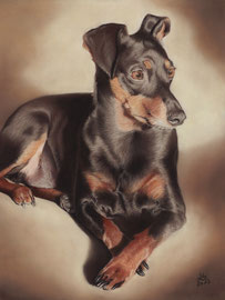 """Rajo vom Teufelseck"", miniature pinscher, pastel on pastelmat, 30 x 40 cm, commission"