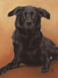 """Babsi"", pastel on pastelmat, 30 x 40 cm, commission"