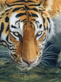 """Elena"" Amur Tigress, pastell on pastelmat, 29 x 39 cm, reference photo Emmanuel Keller@wildlifereferencephotos; Winner of PGE's ""Get Dusty"" , 10/2016; SOLD"