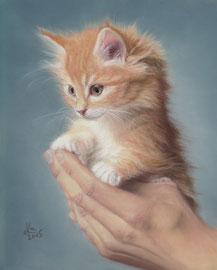 ginger kitten, pastel on pastelmat, 20 x 25 cm, reference photo Rudy and Peter Skitterians; SOLD