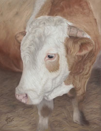 """Heribert"", pastel on pastelmat, 21 x 28 cm, commission"