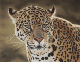 """""""Jaguar"""", pastel on pastelmat, 29 x 37 cm, reference photo Edwin Butter, wildlife reference photos; privately owned"""