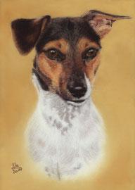 """Josefine"", Jack Russel Terrier, pastel on pastelmat, 21 x 29 cm, commission"