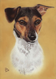 """Josefine"", Jack Russel Terrier, pastel on pastelmat, 21 x 29 cm, commission"
