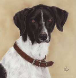 """Ruby"", Scandinavian Hound, pastel on pastelmat, 30 x 30 cm, commission"