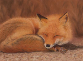 Sleeping red fox, pastel on pastelmat, 30 x 40 cm, reference photo Anthony Quintano; SOLD