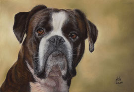 """Bounty"", boxer, pastel on pastelmat, 21 x 29 cm, commission"