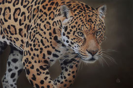 """Chincha"", male Jaguar,  pastel on pastelmat,  40 x 60 cm, reference photo Paul Fine"