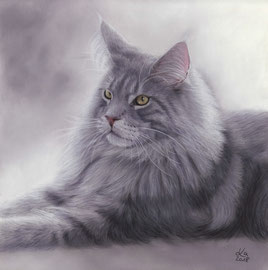 """""""Pino"""" blue silver Maine Coon, pastel on pastelmat, 29 x 30 cm, commission"""