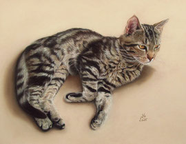 """Findus"", pastel on pastelmat, 30 x 40 cm, commission"