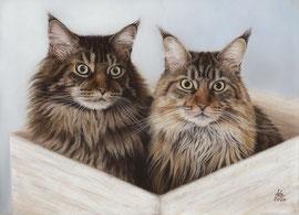 """Teddy + Paula"", Maine Coons, pastel on pastelmat, 30 x 40 cm, commission"