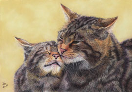 """""""a mothers love"""", scottish wildcats, pastel on pastelmat, 20 x 29 cm, reference photo Peter Trimming"""