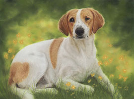 """Maya"", pastel on pastelmat, 29 x 39 cm, commission"