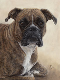 """Jessie"", Boxer, pastel on pastelmat, 30 x 40 cm, commission"