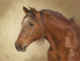 """Goose"", Tennessee Walking Horse, pastel on pastelmat, 29 x 38 cm,  reference photo Karen Broemmelsick; SOLD"