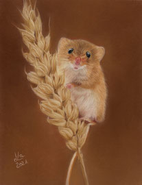 harvest mouse, pastel on pastelmat, 16 x 21 cm, reference photo Charlie Marshall
