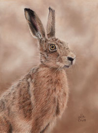 hare, pastel on pastelmat,  22 x 29 cm, reference photo Nick Goodrum