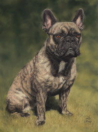 """Cuba"", french bulldog, pastel on pastelmat, 30 x 40 cm, commission"