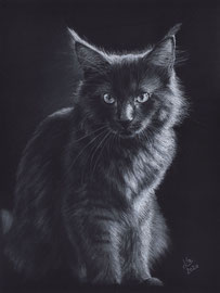 200 €  Maine Coon cat, white charcoal- and pastelpencils on Fabriano Black paper, 24 x 32 cm, reference photo Lenka Novotná