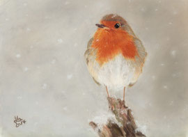 robin, pastel on pastelmat, 15 x 20 cm, reference photo Julian Rad; SOLD