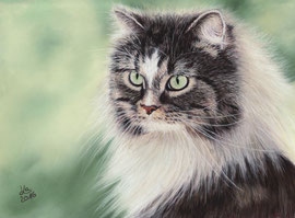 """Ne-Yo"", Norwegian forest cat, pastel on pastelmat, 20 x 28 cm, reference photo Dagmar Stech; SOLD!"