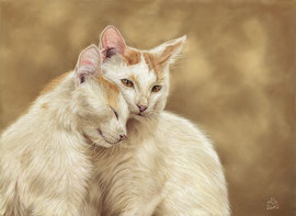White kitties, pastel on pastelmat, 27 x 39 cm, reference photo pixabay