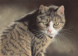 "my ""Minka"", pastel on pastelmat,  20 x 30 cm, own reference"