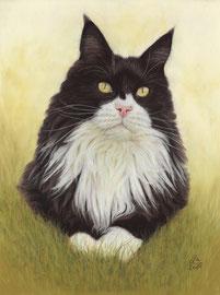 """Pepe"", Maine Coon, pastel on pastelmat, 30 x 40 cm, commission"