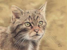 """Heather"", scottish wildcat, pastel on pastelmat, 21 x 28 cm, reference photo Peter Trimming; SOLD"